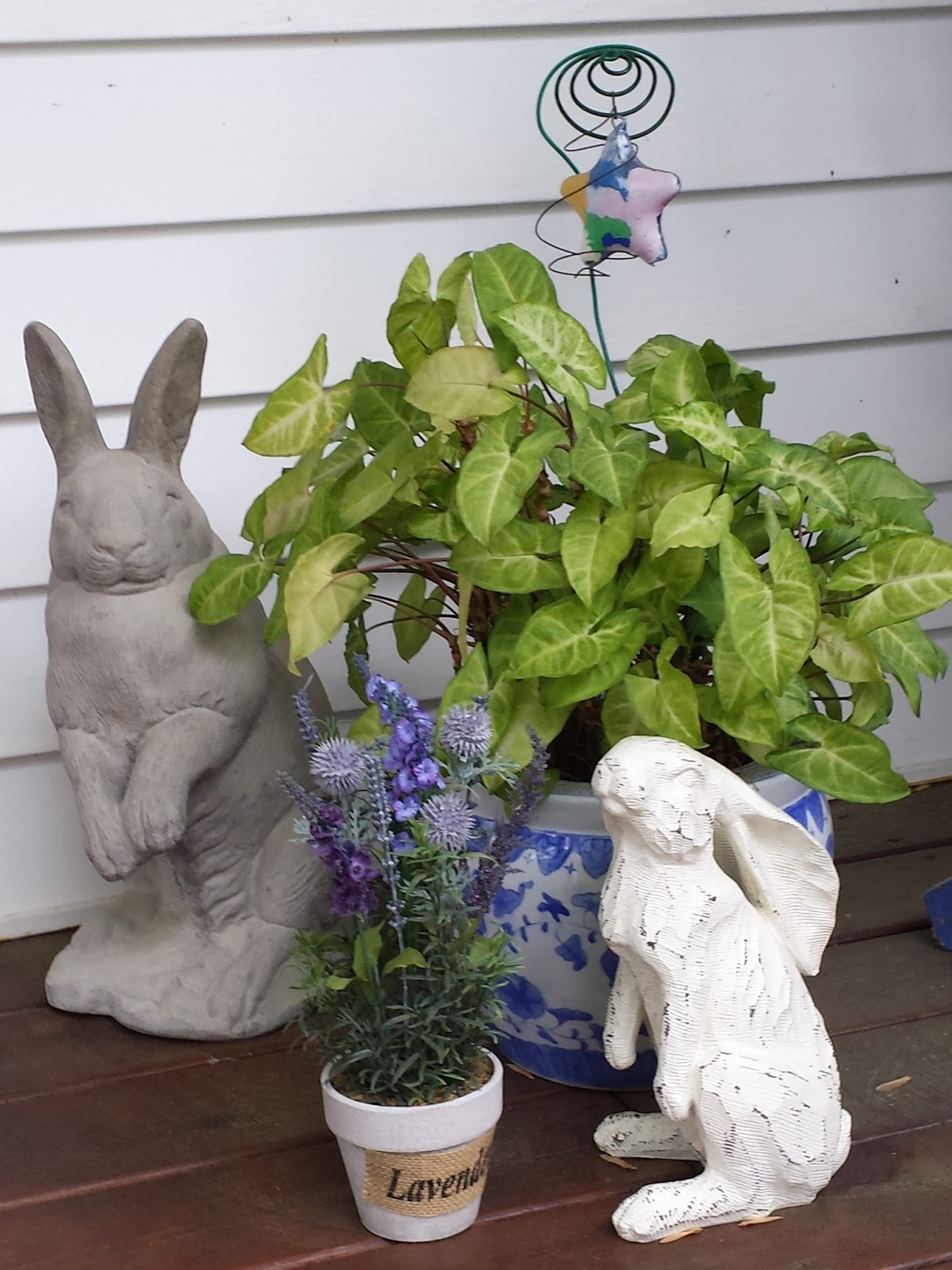 Rabbits and a plant